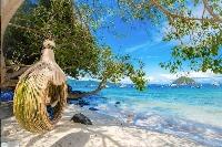 Island Adventure Package (早餐)